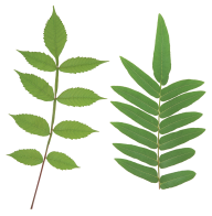 Green Leaves Free PNG Image Download 26