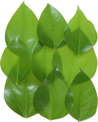 Green Leaves Free PNG Image Download 27