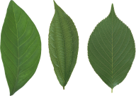 Green Leaves Free PNG Image Download 29