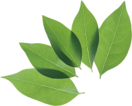 Green Leaves Free PNG Image Download 30
