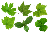 Green Leaves Free PNG Image Download 5
