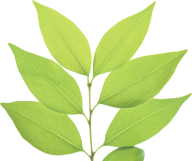 Green Leaves Free PNG Image Download 6