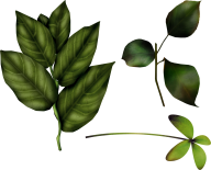 Green Leaves Free PNG Image Download 7