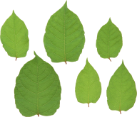 Green Leaves Free PNG Image Download 8