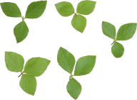 Green Leaves Free PNG Image Download 9