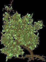 Green Tree Clipart