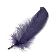 Grey Feather PNG Image Download