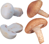grown & cutted mushroom free download png