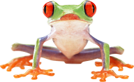 hd frog png