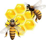 Honey PNG Free Image Download 6
