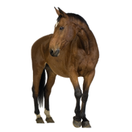Horse PNG Free Image Download 1