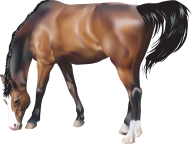 Horse PNG Free Image Download 10