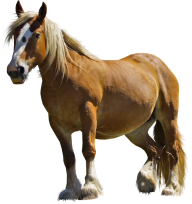 Horse PNG Free Image Download 11