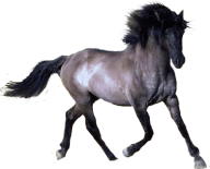 Horse PNG Free Image Download 16