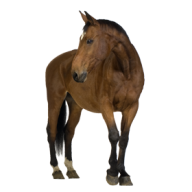 Horse PNG Free Image Download 17