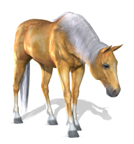 Horse PNG Free Image Download 19