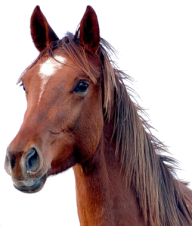 Horse PNG Free Image Download 2