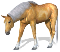 Horse PNG Free Image Download 20