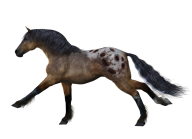 Horse PNG Free Image Download 23