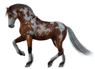 Horse PNG Free Image Download 24