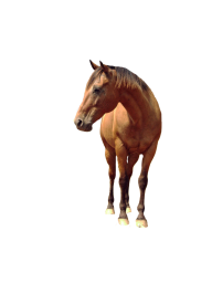 Horse PNG Free Image Download 26