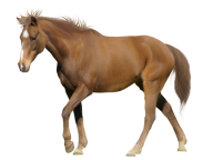 Horse PNG Free Image Download 28