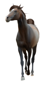 Horse PNG Free Image Download 29