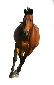 Horse PNG Free Image Download 30