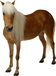 Horse PNG Free Image Download 5