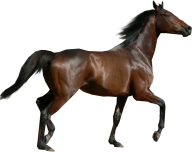Horse PNG Free Image Download 6