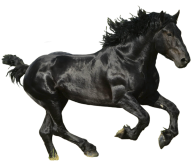 Horse PNG Free Image Download 8