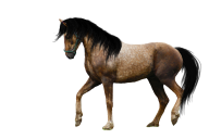 Horse PNG Free Image Download 9