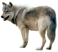 hungry wolf free png download