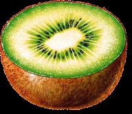 Kiwi PNG Free Download 1