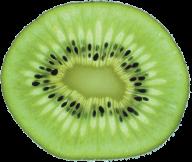 Kiwi PNG Free Download 23