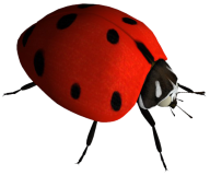 Lady bug PNG Free Download 1