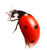 Lady bug PNG Free Download 10