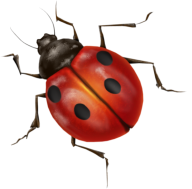Lady bug PNG Free Download 3