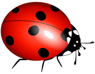 Lady bug PNG Free Download 4
