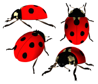 Lady bug PNG Free Download 5