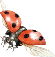 Lady bug PNG Free Download 6