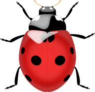 Lady bug PNG Free Download 7