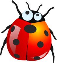 Lady bug PNG Free Download 8