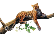 leopard PNG Free Download 7