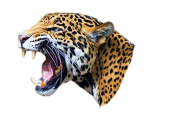 leopard PNG Free Download 8