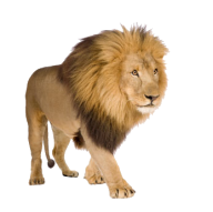 Lion PNG Free Download 13