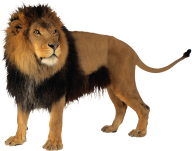 Lion PNG Free Download 2