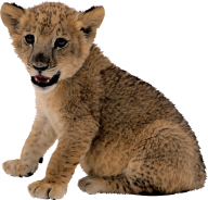 Lion PNG Free Download 4