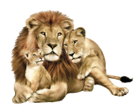Lion PNG Free Download 6