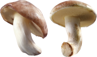 little fresh mushroom free download png
